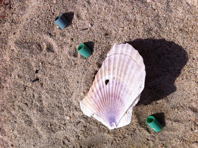 漂着した牡蠣パイプ(まめ管)