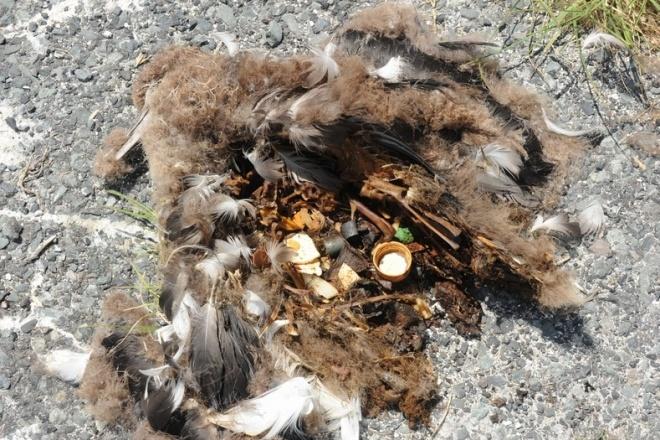 死んだコアホウドリの雛のお腹の中からも出てくるプラスティックごみ